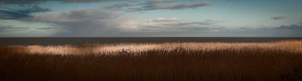 Sylt Panorama Meer Schilf Sonne